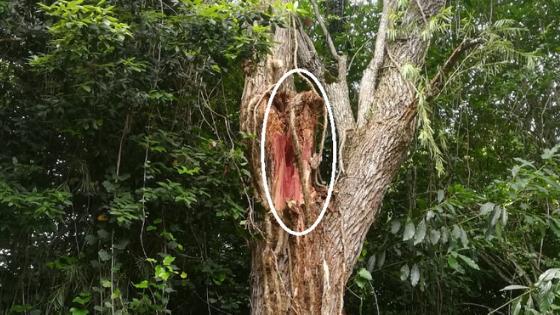 Damage on tree.png