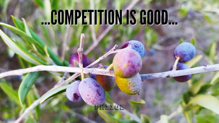 Competition is Good.jpg