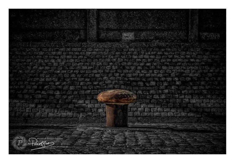 mushroom_csp_border.jpg