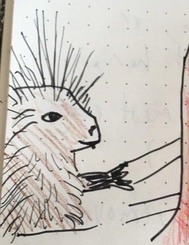mrs porcupine.jpg