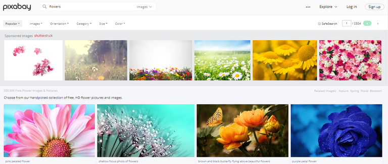 pixabay search.png