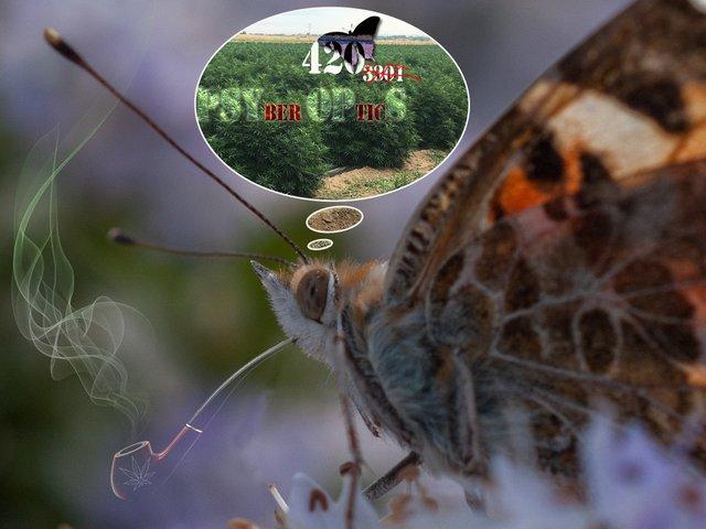 butterfly_420_psyop.jpg