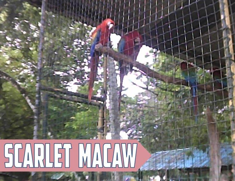 ScarletMacaw.jpg