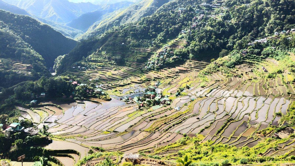 Batad Rice Terraces after harvest