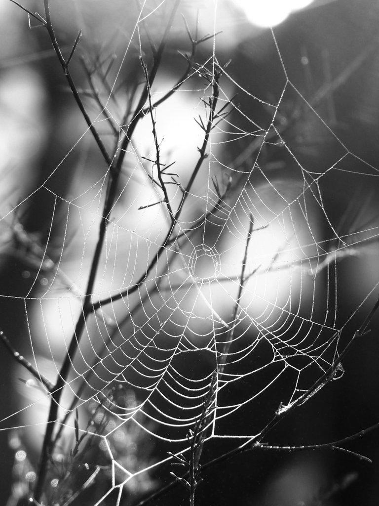 ранкова павутина чб.jpg