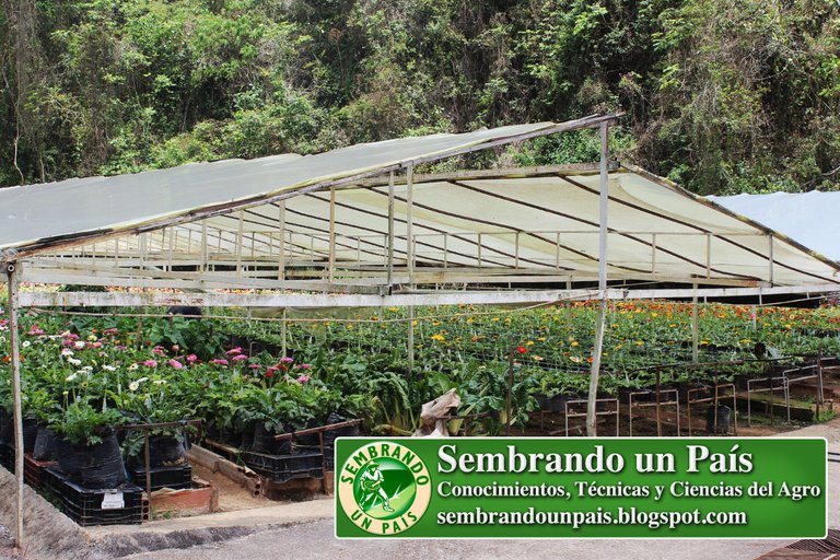 Abejas, Floricultura Ecológica 3 NVOBANNER.jpg
