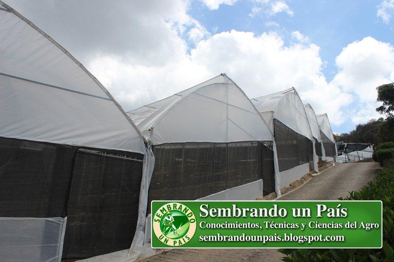 Abejas, Floricultura Ecológica 2 NVOBANNER.jpg