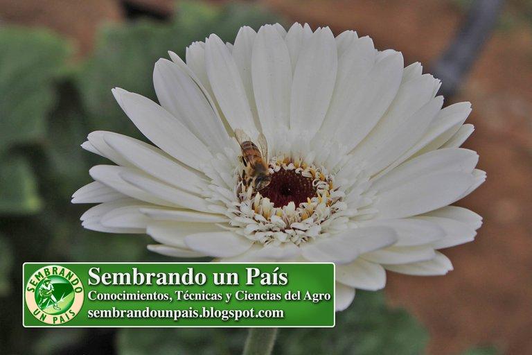 Abejas, Floricultura Ecológica 1 NVOBANNER.jpg