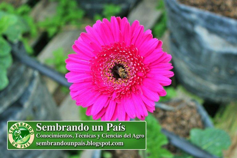 Abejas, Floricultura Ecológica 4 NVOBANNER.jpg