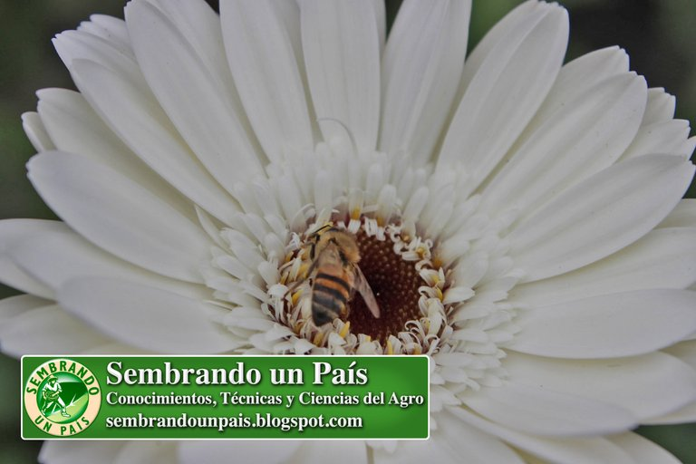 Abejas, Floricultura Ecológica 5 NVOBANNER.jpg
