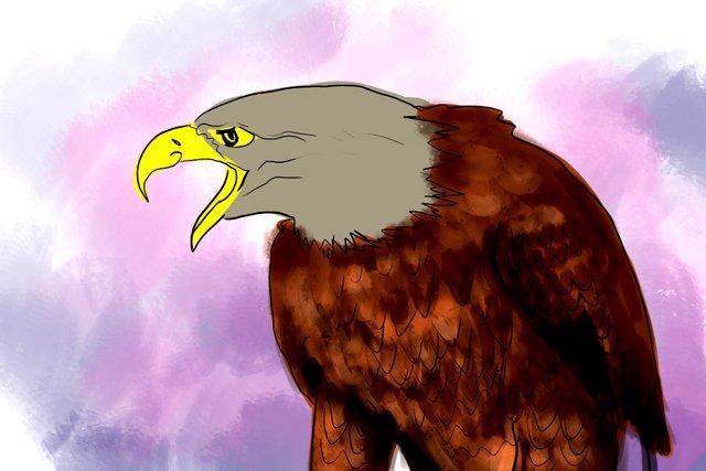 eagle(353).jpg
