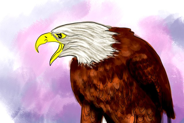 eagle(354).jpg