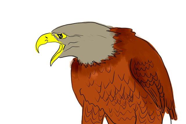 eagle(350).jpg