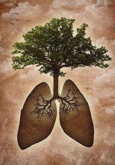 tree-lungs.jpg