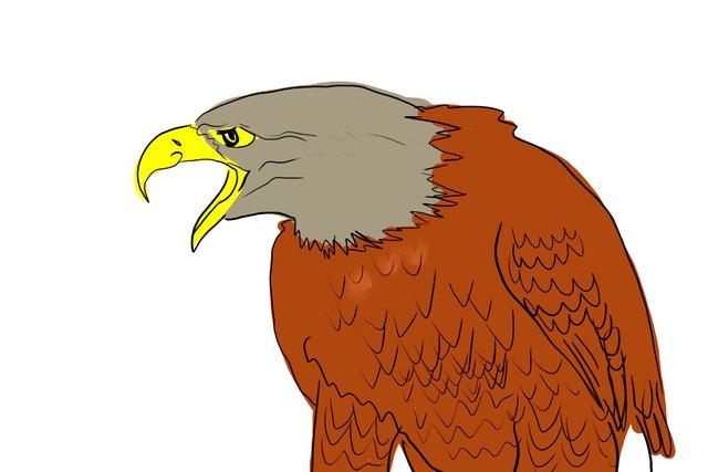 eagle(349).jpg
