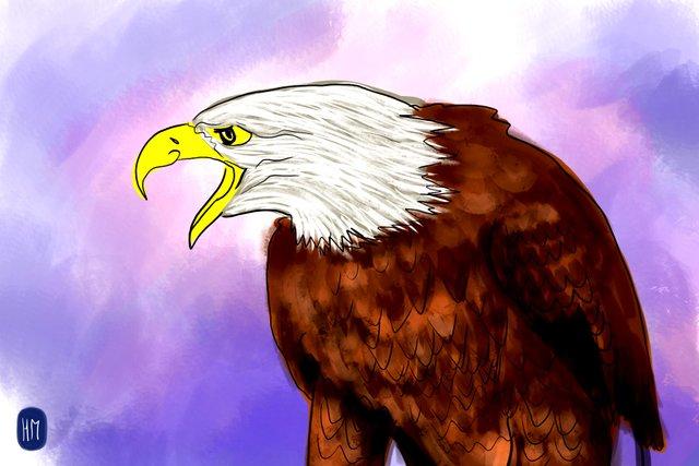 eagle(355).jpg