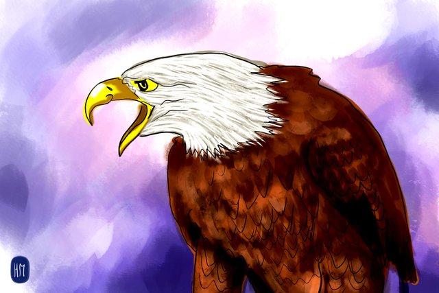 eagle(356).jpg