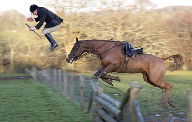 horses0611.jpg