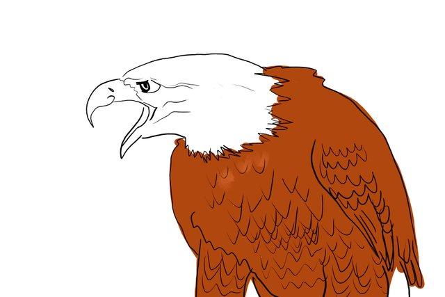 eagle(347).jpg