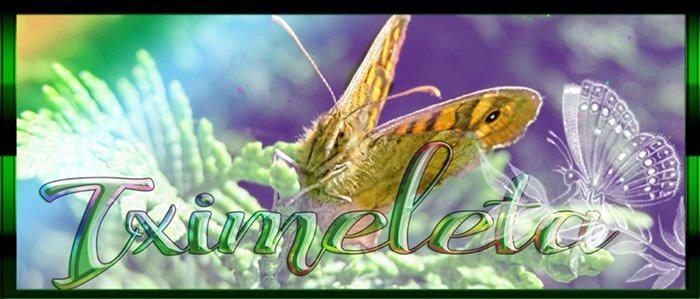 mariposa-4.jpg
