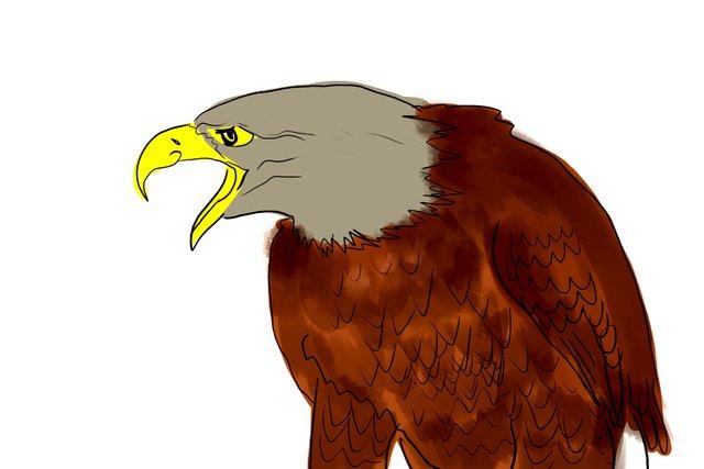 eagle(351).jpg