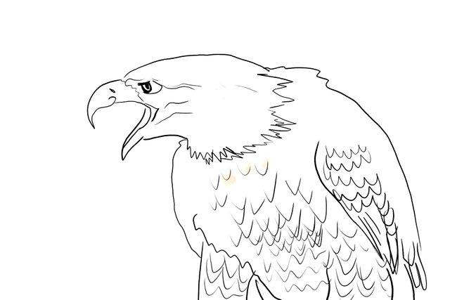 eagle(346).jpg
