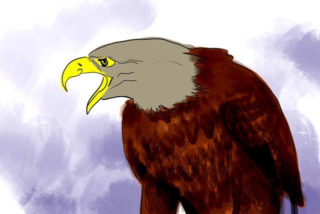 eagle(352).jpg
