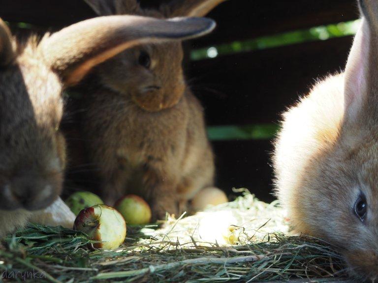 кролики 5.jpg