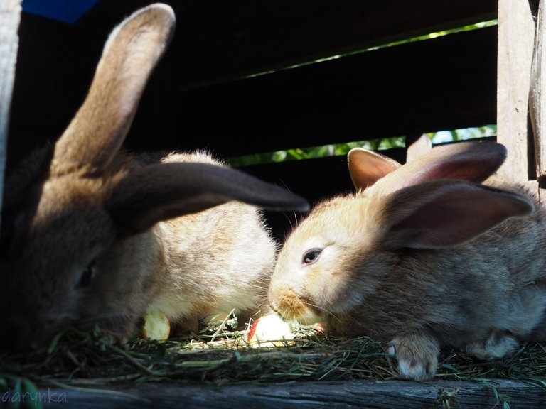 кролики 3.jpg