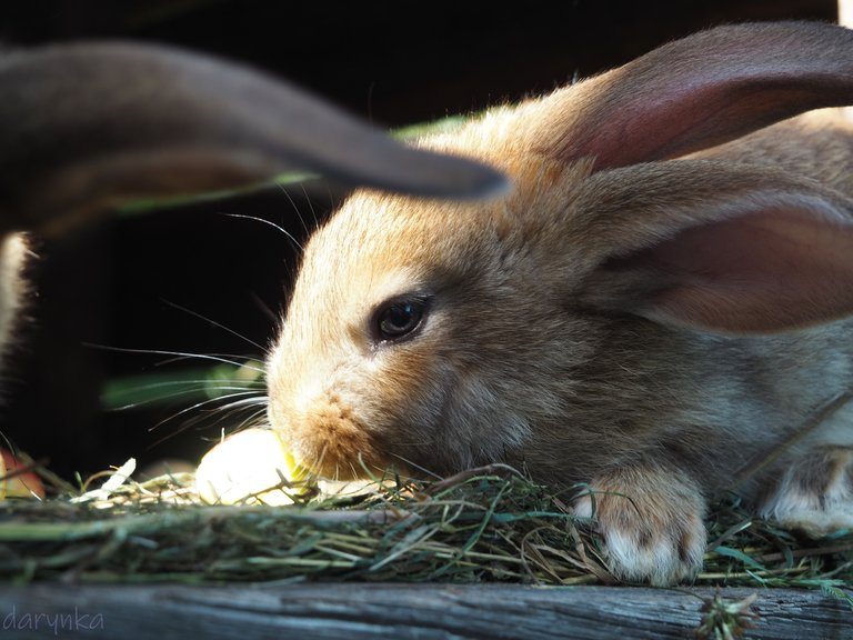 кролики 1.jpg