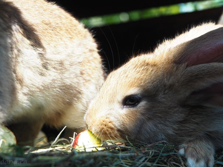 кролики 4.jpg