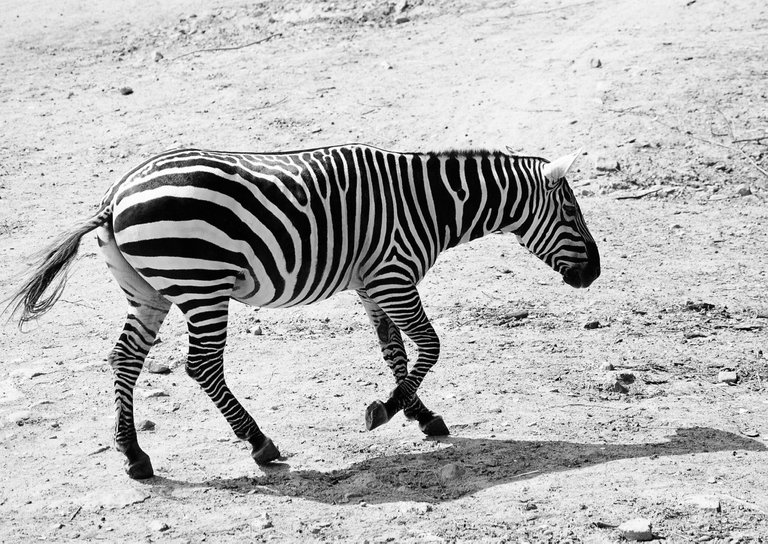 0028.a.pavelsku.stripes.jpg