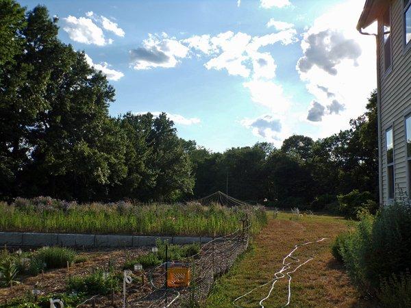 Evening crop June 2020.jpg