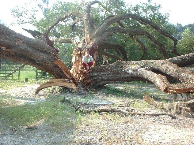 King Shit o Turd Tree.JPG