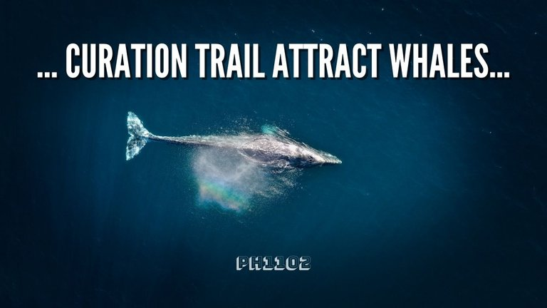 Curation Trail Attract Whales.jpg