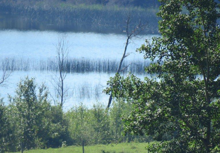 looking beyond tree to pond.JPG