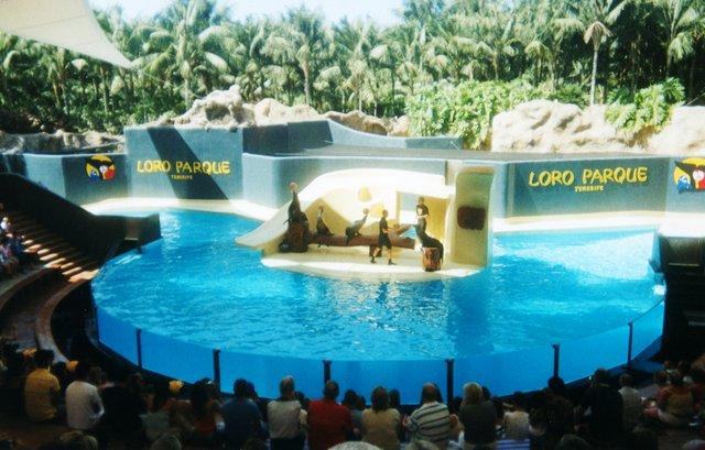 Leones marinos Loro Parque.jpg