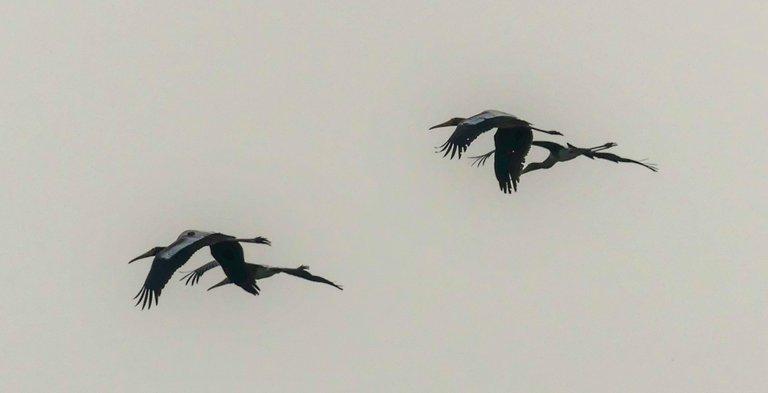 painted_storks.jpg