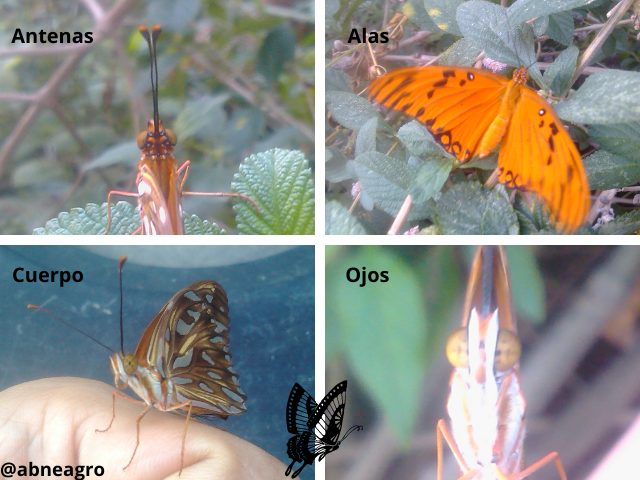 Lepidoptera 5.png