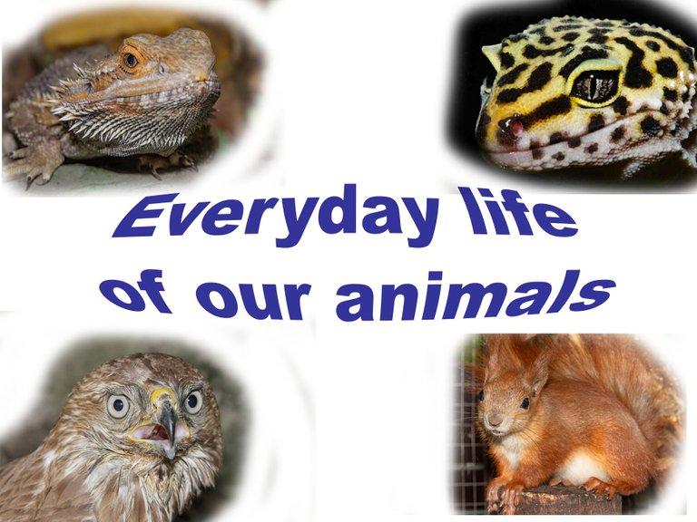 everyday life.jpg