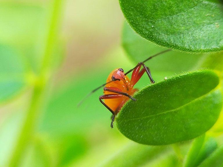 Serangga (32).jpg