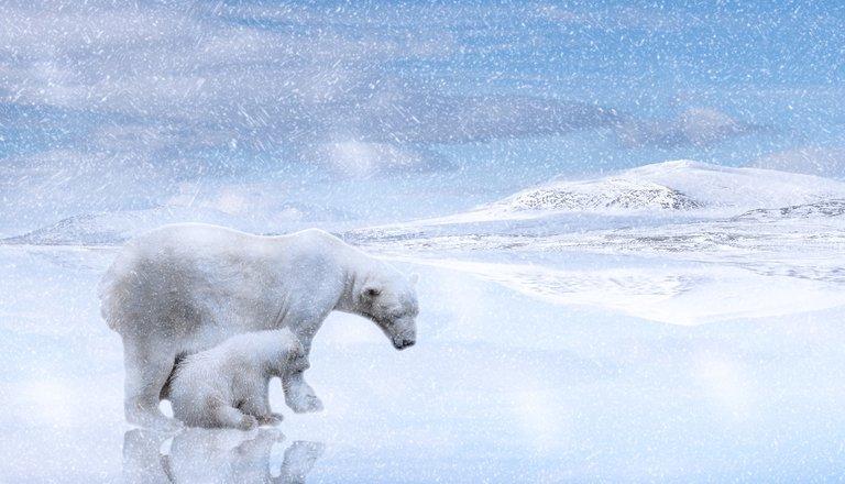 oso polar 3.jpg