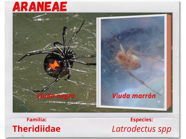 Arañas 3.png