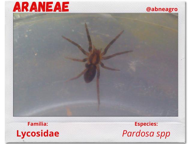 Arañas 5.png