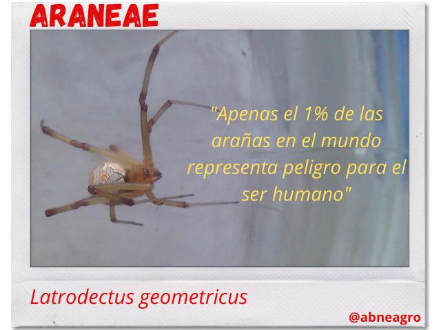 Arañas 1.png