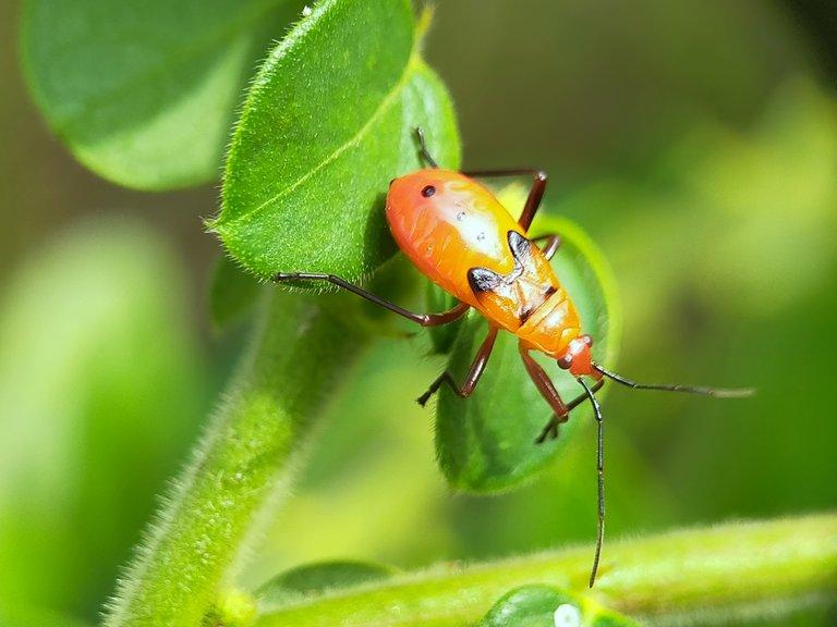 Serangga (41).jpg