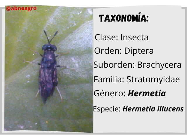 Diptera libro.png