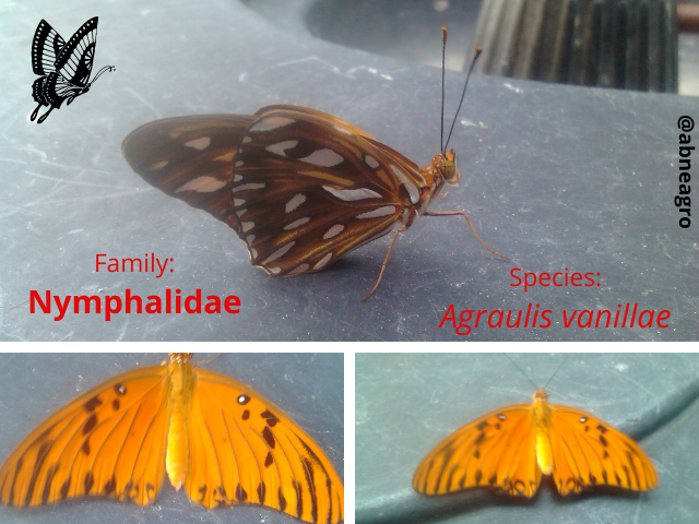 Lepidoptera 3.png