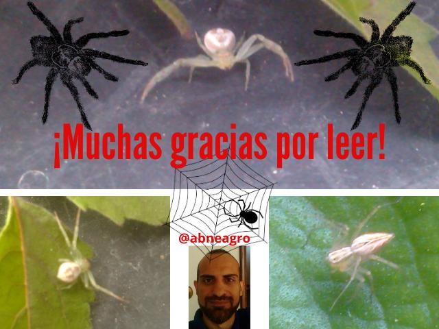 Araneae final.png