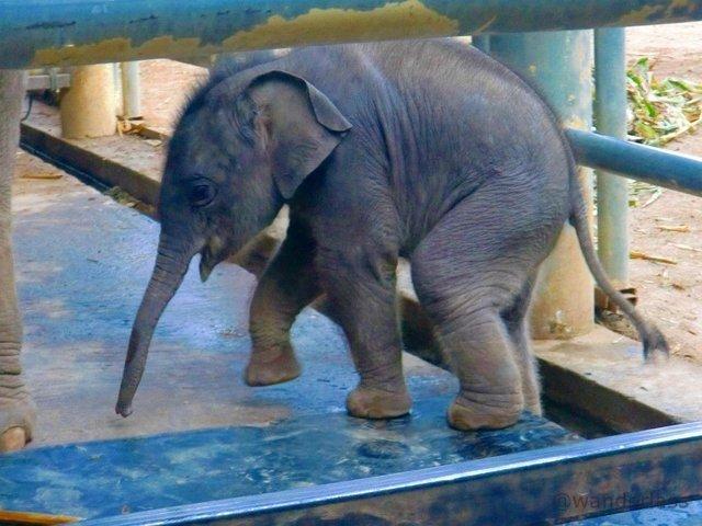 Elephant Nature Park Chiang Mai Thailand Elephant Spirit Crushing